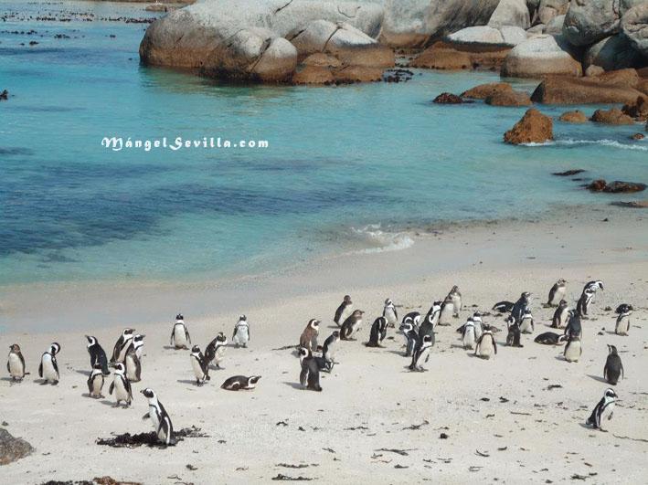 Pingüinos en Ciudad del Cabo